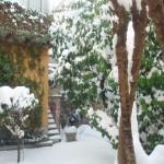 Giardino con la neve