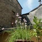 Particolare giardino fiorito